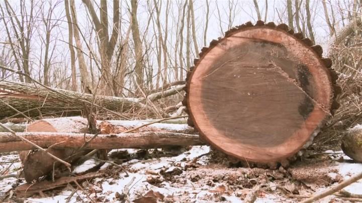 Giá gỗ óc chó